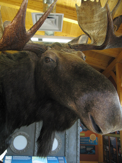 J. Black, Wildlife Artist BLACK & TAN TAXIDERMY & TANNING